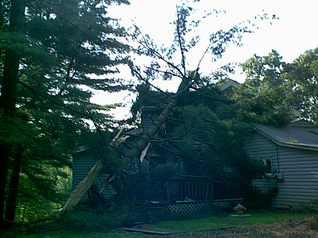 heres the Big Pine tree that was hit by lightening during a hell of a storm in Aug,, and hit my only neighbors house,,,,